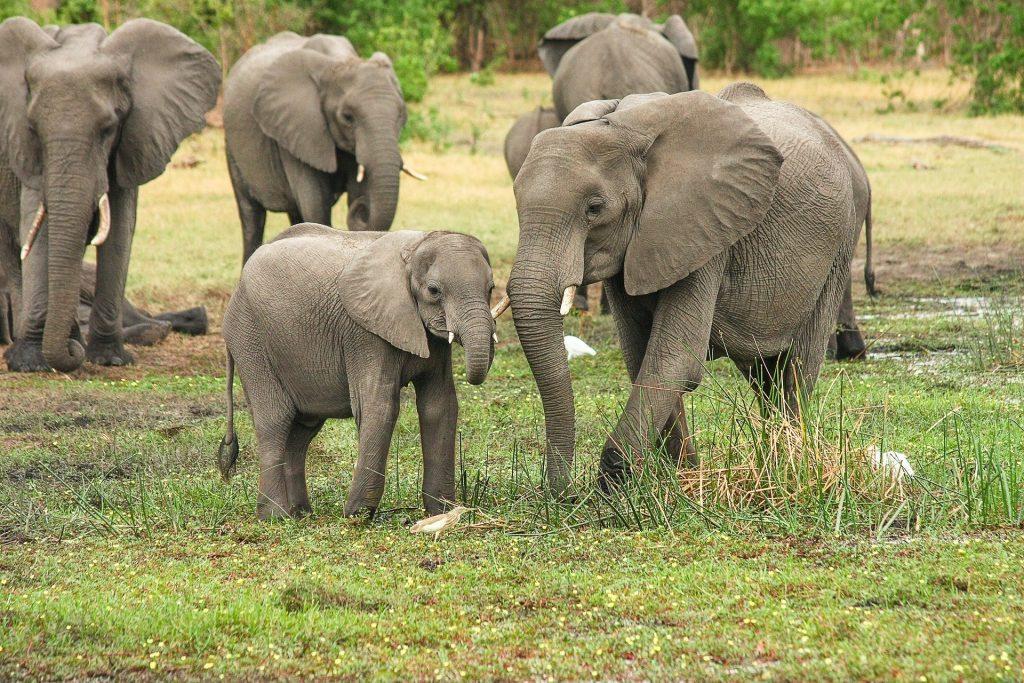 elephants 2923917 1920